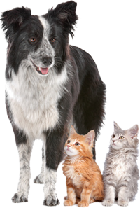 While the owner's away (for the day) - the dog and cat can play!Our day care service is specially designed for people who find themselves away from home just for the day and need pet care.