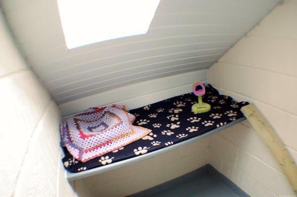 A single room in the cattery