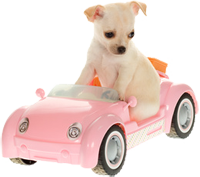 As pet owners we know how busy your pet's life can be...so the Moscar Pet Taxi is ready to save you time and chauffeur your pet to its various appointments.